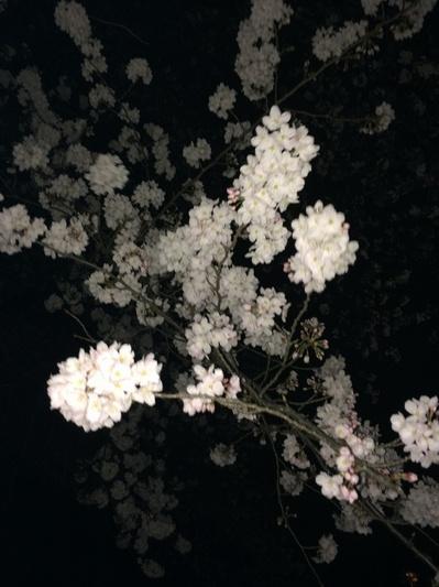 sakura2014-2.jpg